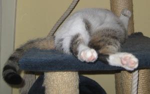 Zako's upstanding paw