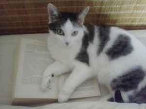 Even Damien's cat recognizes the usefulness of having a published book.
